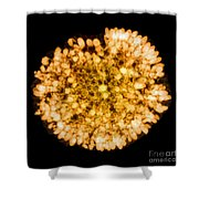 Wasp Nest, X-ray Shower Curtain