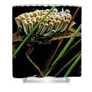 Water Beetle Brooding Eggs Shower Curtain