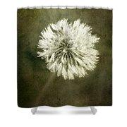 Water Drops On Dandelion Flower Shower Curtain