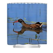 Water Rail With Fish Shower Curtain