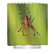 Web Walker Shower Curtain