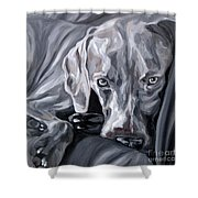 Weimaraner Shower Curtain
