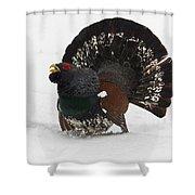 Western Capercaillie Shower Curtain