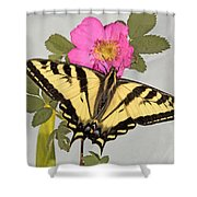 Western Tiger Swallowtail Shower Curtain