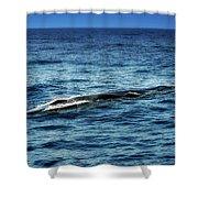 Whale Watching Balenottera Comune 3 Shower Curtain