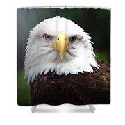 Where Eagles Dare 4 Shower Curtain