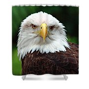 Where Eagles Dare Shower Curtain
