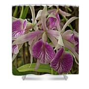 White And Purple Orchids Shower Curtain