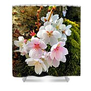 White Apple Blossom In Spring Shower Curtain
