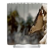 White Breasted Nuthatch In The Snow Shower Curtain