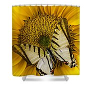 White Butterfly On Sunflower Shower Curtain