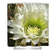 White Cactus Flower Shower Curtain