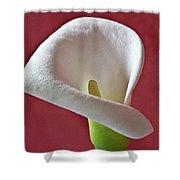 White Calla Shower Curtain by Heiko Koehrer-Wagner