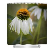 White Coneflower Shower Curtain