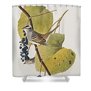 White-crowned Sparrow Shower Curtain