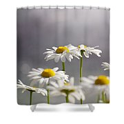 White Daisies Shower Curtain