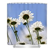 White Daisies Shower Curtain by Elena Elisseeva