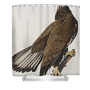 White-headed Eagle Shower Curtain