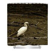 White Snowy Egret Shower Curtain