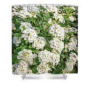 White Spiraea Flower Shower Curtain