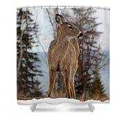 White-tailed Deer Three Shower Curtain