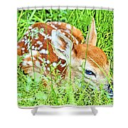 White-tailed. Virginia Deer Fawn Shower Curtain