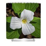 White Trillium 3 Shower Curtain