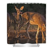 Whitetail Deer At Waterhole Texas Shower Curtain by Dave Welling