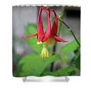 Wild Angel Shower Curtain