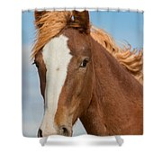 Wild Foal Shower Curtain