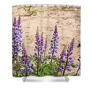 Wild Lupine Flowers Shower Curtain