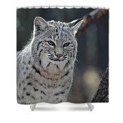 Wild Lynx Cat Shower Curtain