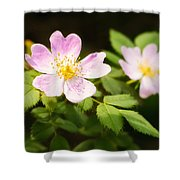 Wild Pink Eglantine Shower Curtain