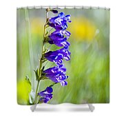 Wildflowers And Pikes Peak In The Pike National Forest Shower Curtain