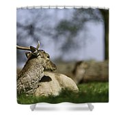 Wildlife  Shower Curtain