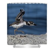 Wilson's Plover Shower Curtain