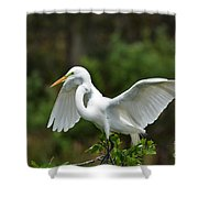 Wings Out Shower Curtain