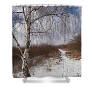 Winter Birch Shower Curtain