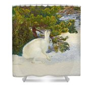 Winter Hare Shower Curtain
