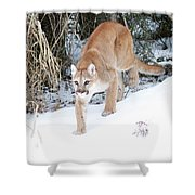 Winter Prowler Shower Curtain