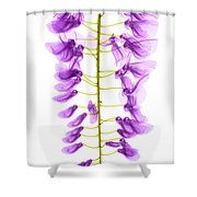 Wisteria Flowers, X-ray Shower Curtain