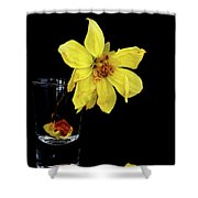 Withered Lifeless Dahlia Flower Shower Curtain