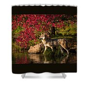 Wolf Portrait In Fall Shower Curtain