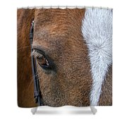 Wonder Pony Shower Curtain