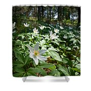Wood Anemones Shower Curtain