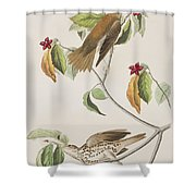 Wood Thrush Shower Curtain
