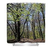 Woodland Walk England Shower Curtain