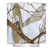 Woodpecker And Windmill Shower Curtain