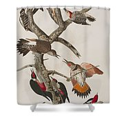 Woodpeckers Shower Curtain