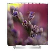 All Wrapped Up Shower Curtain